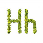 foto of storybook  - Leafy storybook font depicting a letter H in upper and lower case - JPG