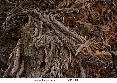Trunk Of An Old Tree With Many Sprouts