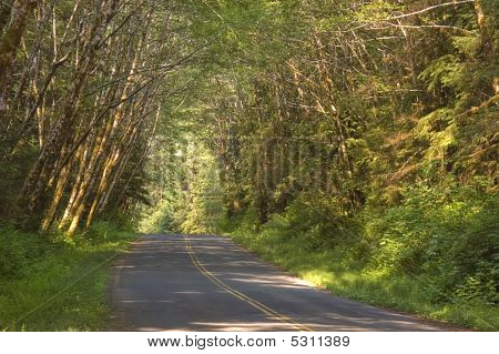 Wooded Country Road