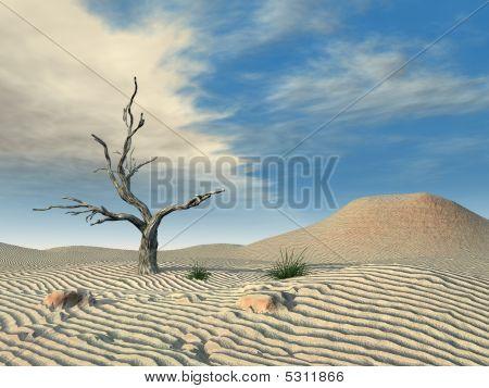 Desert Dead Tree