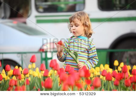 Little Girl In Striped T-shirt And Tulips On Street