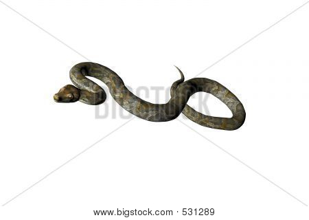 Isolated Snake Three