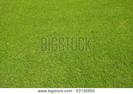 Close Up Of Green Grass Background Texture.