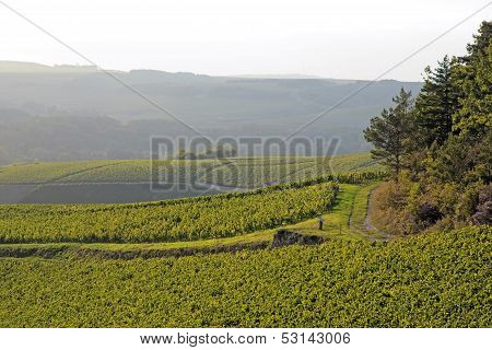Landscape of vineyards near of Auxerre (vines of Chablis Burgundy France)