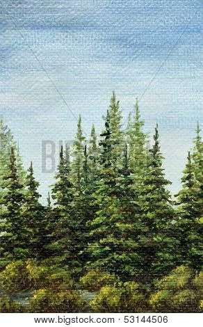 Picture, landscape, spruce forest
