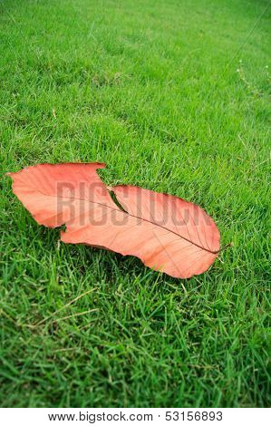 Die Leaf On Green Grass