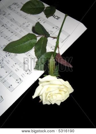 Sheet Music And White Rose
