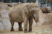 Elephant Exhibit At The Zoo