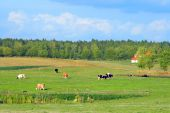 Polish Summer Rural Landscape poster