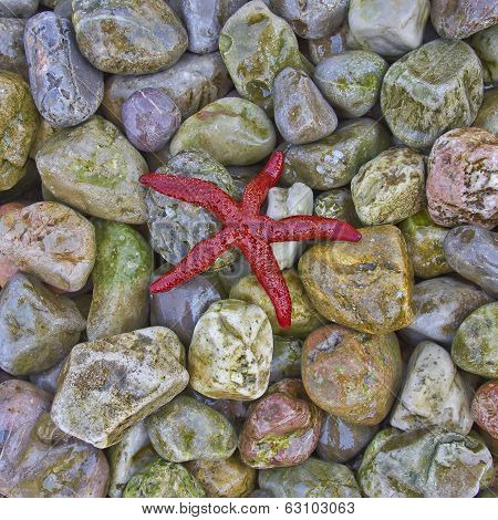 red sea star on colorful pebbles beach