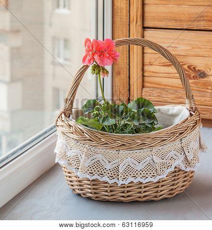 Basket With Pink Pelargonium (geraniums) In The Window