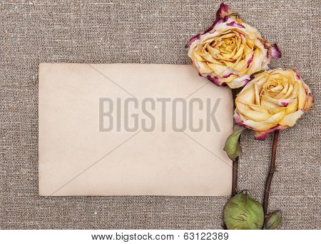 Dry Roses And Old Paper On The Burlap