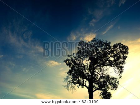 Panorama Silhouette Of A Lone Tree At Sunset