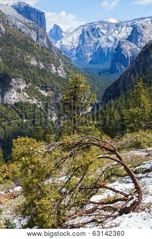 A Bending Tree With View Of The Half Dome