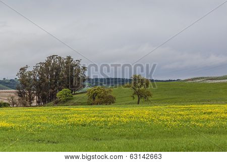 The Yellow Valley I