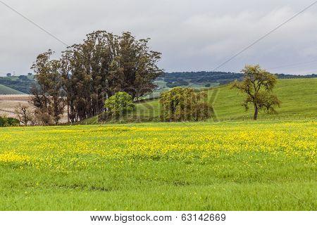 The Yellow Valley III