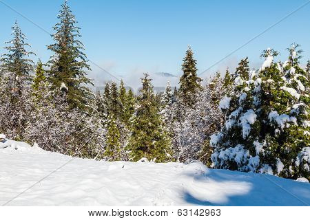 Snow And Green Trees