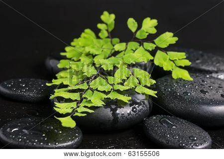 Spa Still Life With Green Branch Of Maidenhair And Zen Stones With Drops