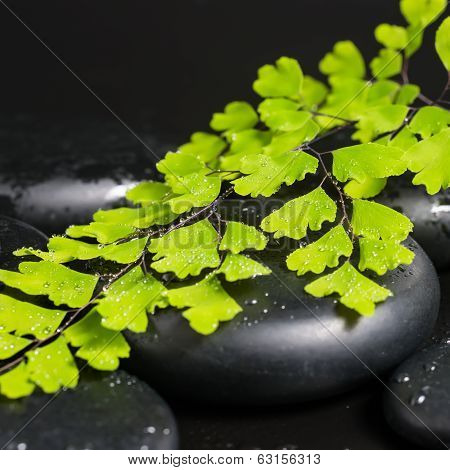 Spa Concept With Green Branch Of Maidenhair And Zen Stones With Drops, Closeup