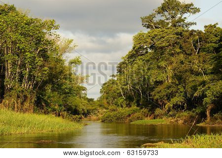 A River And Beautiful Trees In A Rainforest Peru