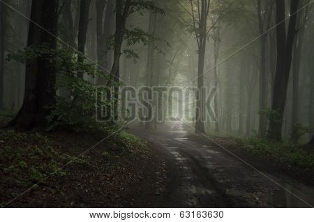Dark mysterious woods with road and fog after rain