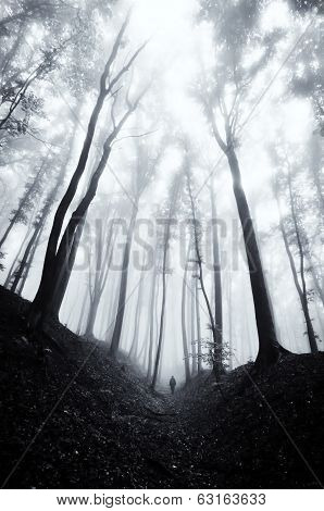 man walking through a huge dark forest with black trees