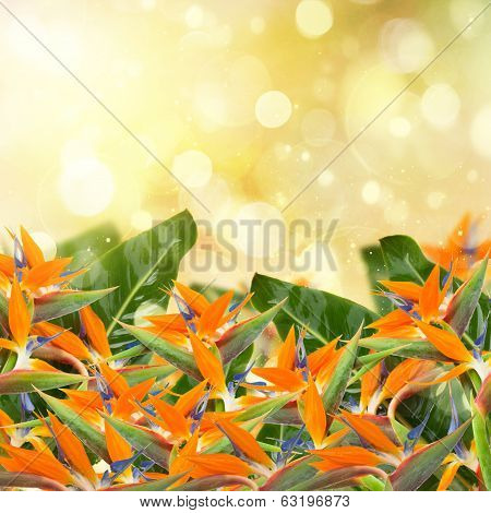 garden with strelitzia flowers