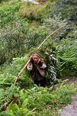 Old Man Carrying Herbs In The Himalayas
