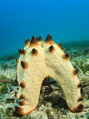 image of spawn  - Starfish spawning underwater - JPG