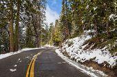 image of sequoia-trees  - Giants Sequoia Grove in the Mariposa - JPG