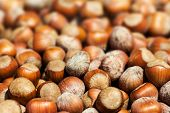 Hazelnuts Background Macro. Heap Of Hazel Nuts Background Close Up.
