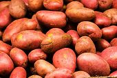 Fresh Red Potatoes On Display At The Market. Potato Background. Food Background.