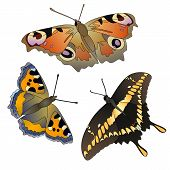 Vector Set Of Butterflies.