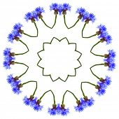 Floral Art Abstract Pattern of Cornflower isolated on white background