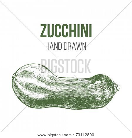 hand drawn green zucchini isolated on white background