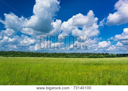 Vibrant Springtime Fresh Landscape