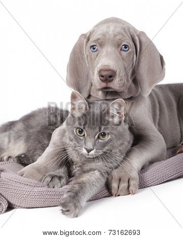 Dog and cat relaxing on white background