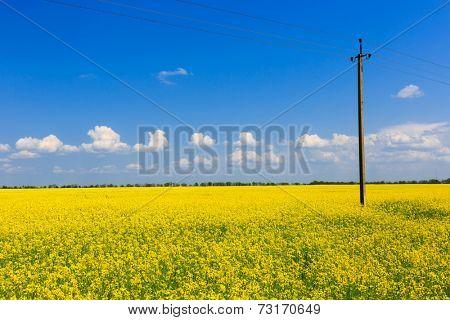 power line on rape field. Ukraine.