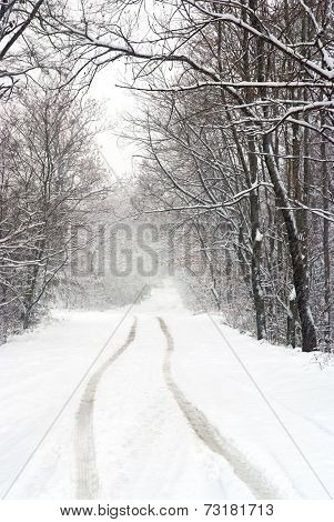 snowfall view on the country road