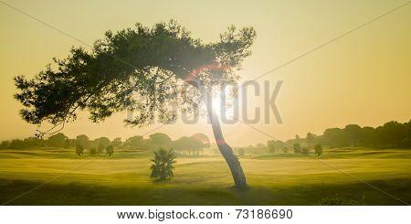 Big pine tree and the sunrise in Antalya Turkey