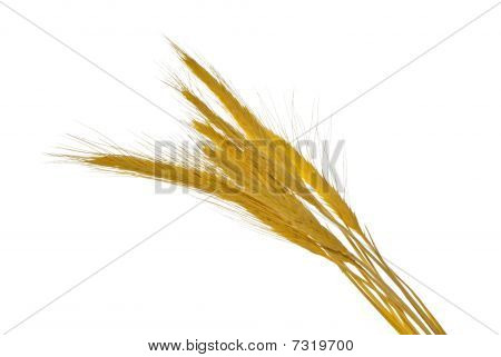 spikelets