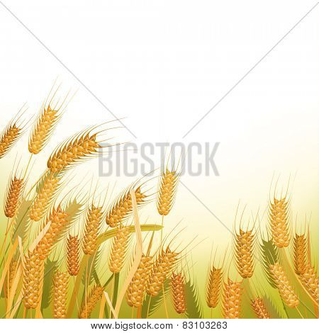 Wheat field with place for your text