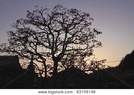 Japanese Tree Silhouette