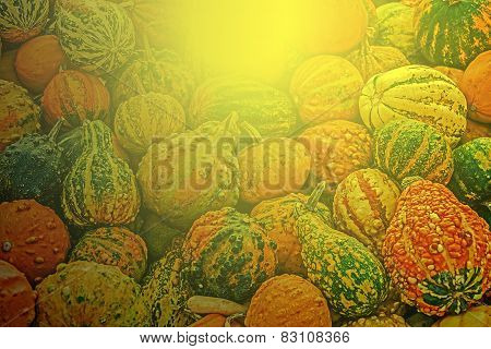 Mixed Colorful Pumpkins In Autumn Sunset Light