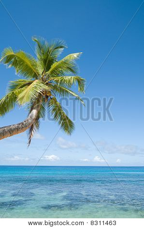 Palm Tree Over Coral Reef