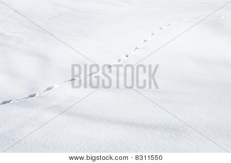 First Footsteps In New Snow