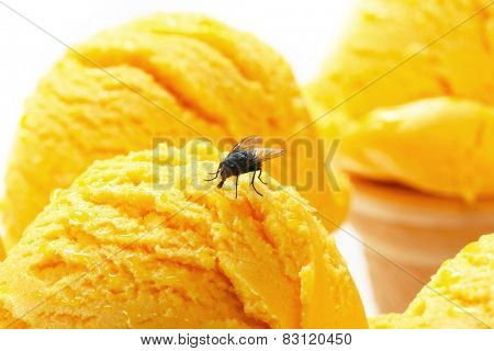 Housefly on a scoop of ice cream