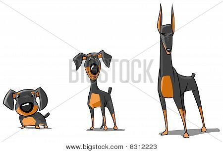 Three Doberman Pinschers.