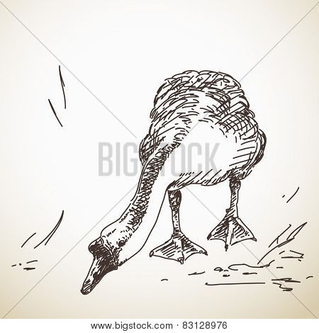 Goose, Vector Sketch, Hand drawn illustration