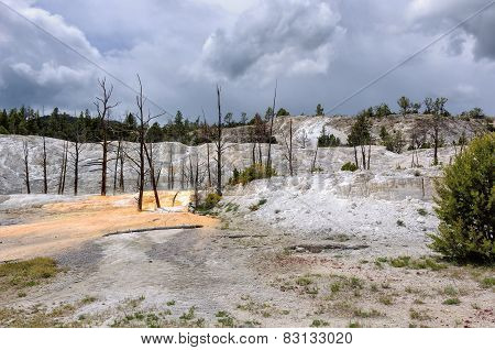 Dead trees stand in the travertine terrace of Mammoth Hot Springs, Yellowstone National Park